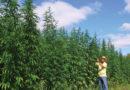 Volné pěstování konopí v celých USA
