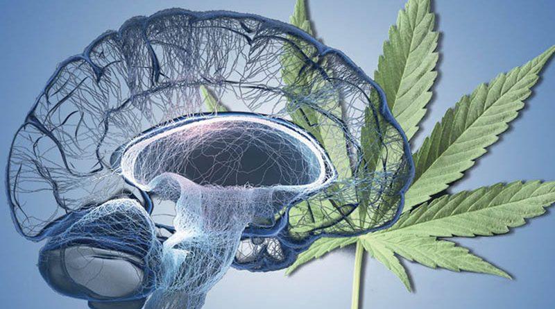 S CBD za správné prokrvení mozku