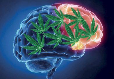 Léčebné konopí snížilo počet epileptických záchvatů o 97%